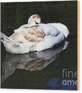 Swan Asleep Wood Print