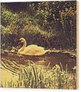 Swan At The Golden Lake Wood Print