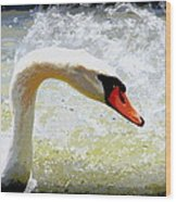 Swan - Beautiful - Elegant Wood Print