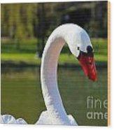 Swan Boat Wood Print