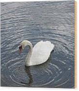 Swan Circles Wood Print