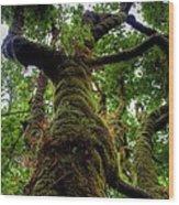 Swan Creek Tree Wood Print