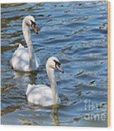 Swan Day Wood Print