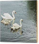 Swan Family Wood Print by Jim  Calarese