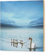 Swan Family On The Lake Wood Print