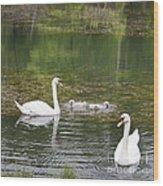 Swan Family Squared Wood Print