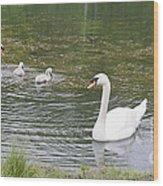 Swan Family Wood Print by Teresa Mucha