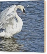 Swan Feather Wood Print