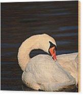 Swan Grooming Wood Print