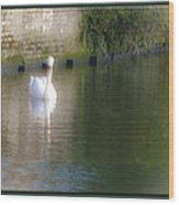 Swan In The Canal Wood Print