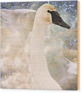 Swan Journey Wood Print by Kathy Bassett