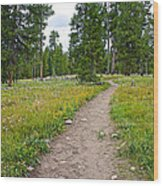 Swan Lake Trail In Grand Teton National Park-wyoming Wood Print