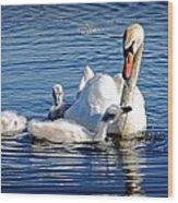 Swan Mom And Cyngets Wood Print