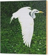 Swan-oil Painting Wood Print by Rejeena Niaz