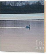 Swan On Lake At Dusk Wood Print