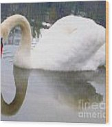 Swan Reflection Wood Print