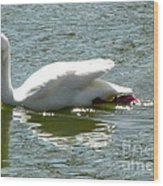 Swan Reflection Wood Print by Terry Weaver