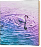 Swan Ripples Wood Print