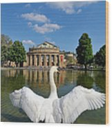 Swan Spreads Wings In Front Of State Theatre Stuttgart Germany Wood Print