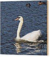 Swan Swim Wood Print