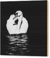 Swan White On Black Wood Print