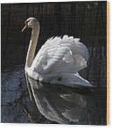 Swan With Reflection  Wood Print