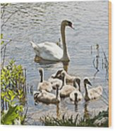 Swan With Signets 2 Wood Print