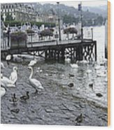 Swans And Ducks In Lake Lucerne In Switzerland Wood Print
