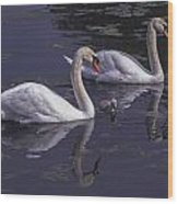 Swans And Signet Wood Print
