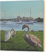 swans at Christchurch harbour Wood Print by Martin Davey
