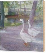 Swans At Smithville Park Wood Print