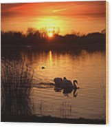 Swans At Sunset Wood Print by Ed Pettitt