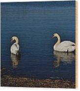 Swans Belle Isle Wood Print