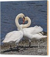 Swans Courting Wood Print