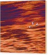 Swans Flying Wood Print