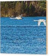Swans In Flight - Unity Park Wood Print