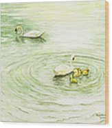 Swans In St. Pierre Wood Print