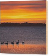 Swans In The Sunrise Wood Print