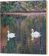 Swans At Betty Allen Wood Print