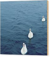 Swans On The Vltava River, Prague Wood Print
