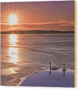 Swans Sunrise Wood Print