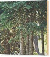 Swarm Of Gnats Wood Print