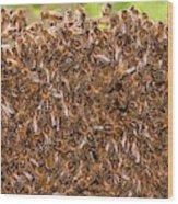 Swarm Of Honey Bees Wood Print
