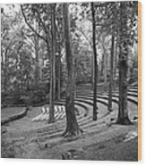 Swarthmore College Scott Amphitheater Wood Print