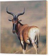 Swayne Hartebeest Wood Print