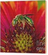 Sweat Bee Collecting Pollen Wood Print