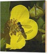Sweat Bee Wood Print