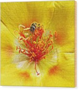 Sweat Bee On Rock Rose Wood Print