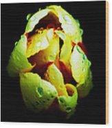 Sweating Tulip Wood Print by Kalvin George