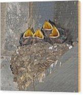 Sweet Adeline My Adeline Wood Print by Robert Frederick